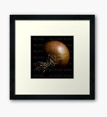 Onion ~ Allium sepa Framed Print