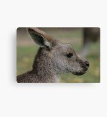 Wallaby Canvas Print