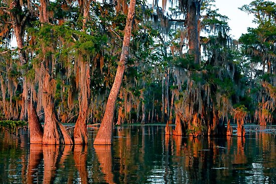 Cypress Grove by Nicholas Blackwell