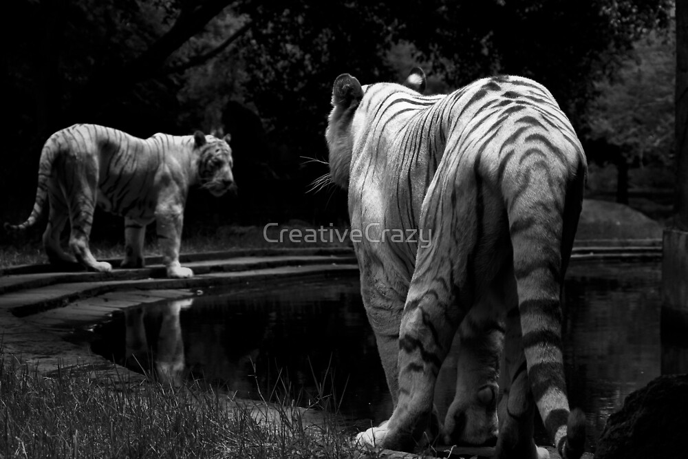 The White Tiger Kingdom by CreativeCrazy