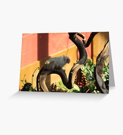 Silvery Marmoset Greeting Card
