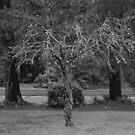Angel Tree - N.C. by Matsumoto