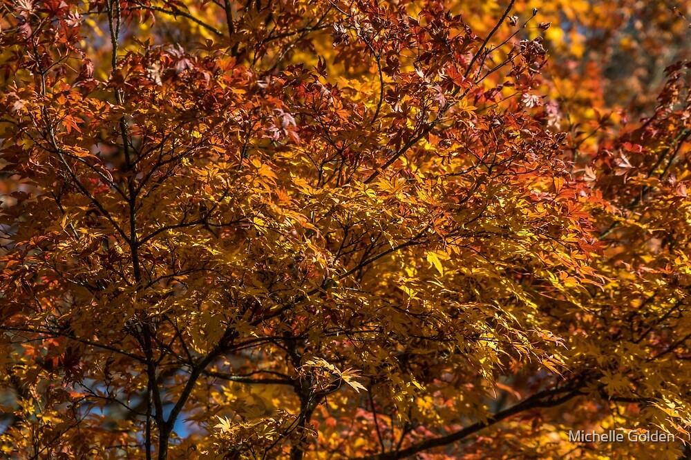 Autumn colours by Michelle Golden