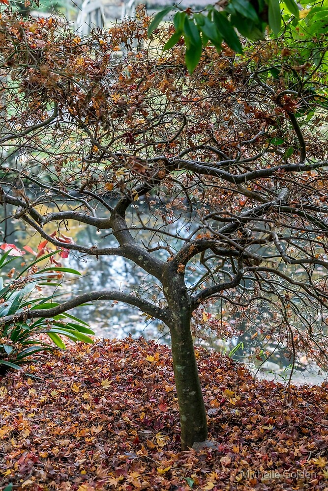 Alfred Nicholas Memorial Gardens - Autumn colours by Michelle Golden