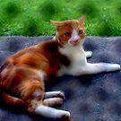 Orange Stray by hickerson