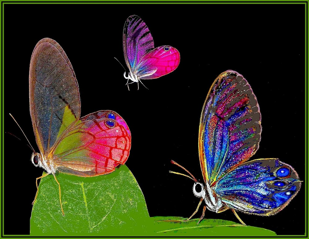 BUTTERFLIES : Glass Winged Painting Collage Print by posterbobs