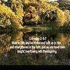 ASHBURNHAM REFLECTIONS/BIBLE VERSE COLOSSIANS; 2 v6-7 (ROOTED) by Shoshonan