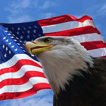 American Flag and Bald Eagle by ErikaKaisersot
