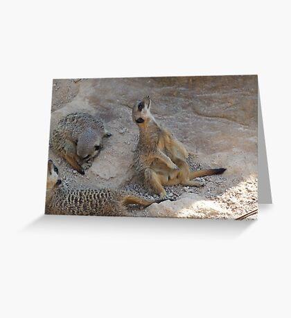 Mear kats Greeting Card