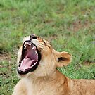 yawning by Candice Cahill