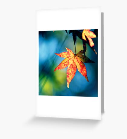 Tuesday Greeting Card