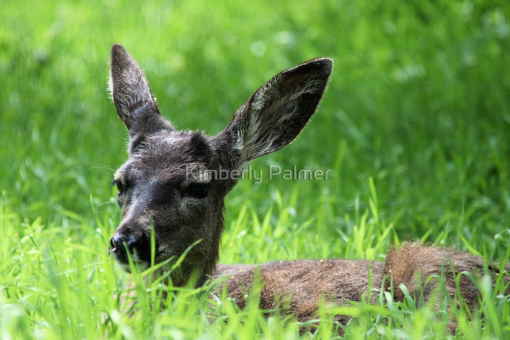 Oh Deer by Kimberly Palmer