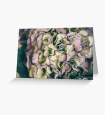 Close up of hydrangea flowers Greeting Card