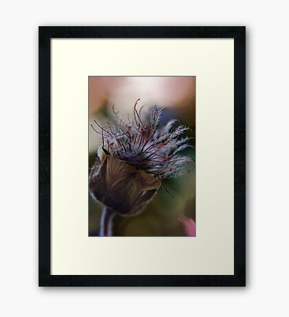 Marvelous (from wild flowers collection) Framed Print