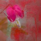 Bleeding Heart by DIANE  FIFIELD