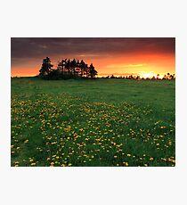 Dandy Sunset Photographic Print