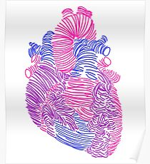 Bisexual Anatomical Heart Poster