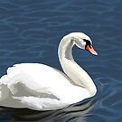 Elegant Swan by Charmaine Bailey