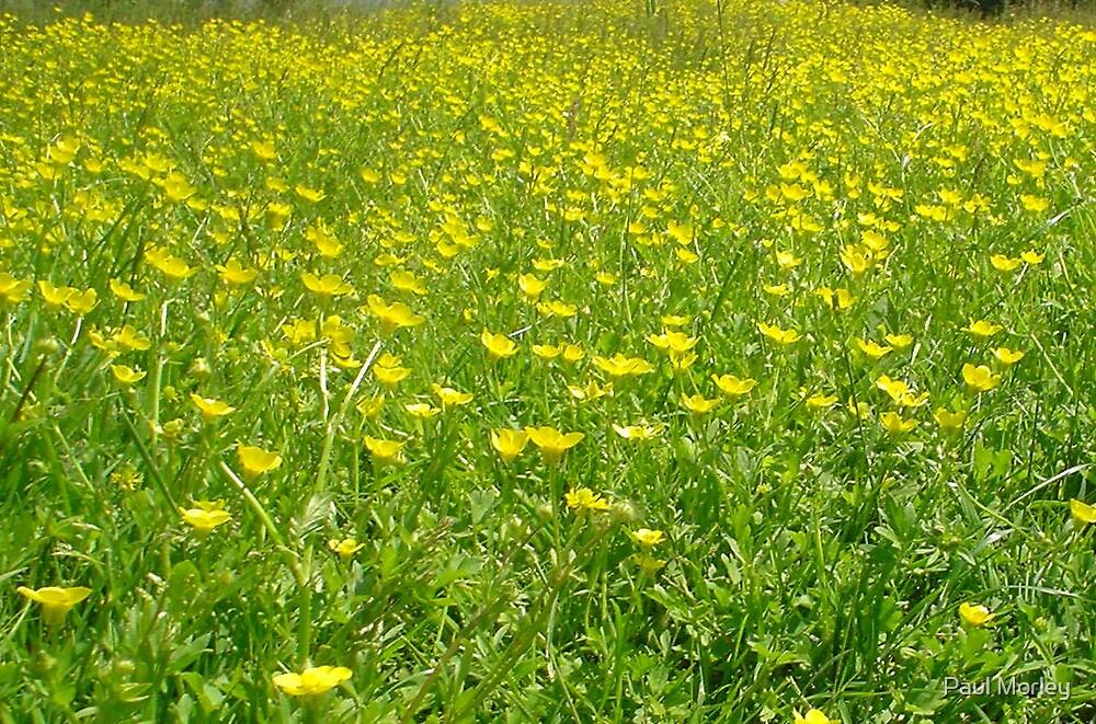 Buttercup Field by Paul Morley