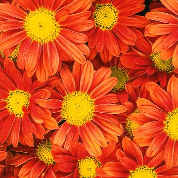 The Beauty of Flowers is undeniable by ExpressingSelf