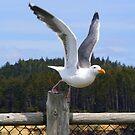 Taking Flight by Rhonda  Thomassen