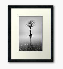 Loch Lomond Tree in the mist Framed Print