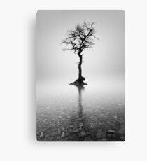 Loch Lomond Tree in the mist Canvas Print