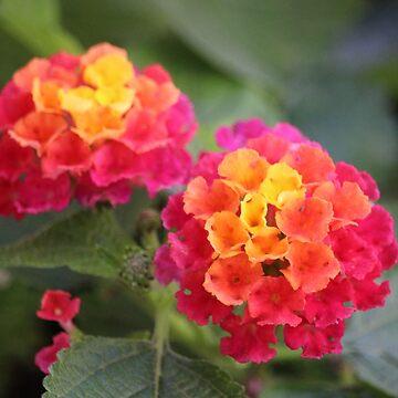 Butterfly Flowers by croper