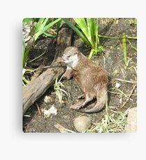 Cute little otter  Canvas Print