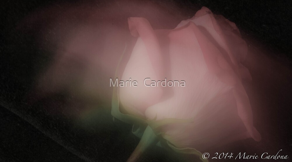Rose In Motion by Marie  Cardona