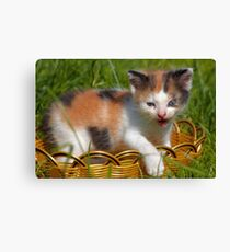 cat pet Canvas Print