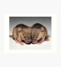 Baby Mice Art Print