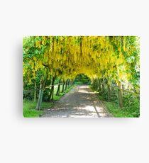 Laburnum Arch Walkway Canvas Print