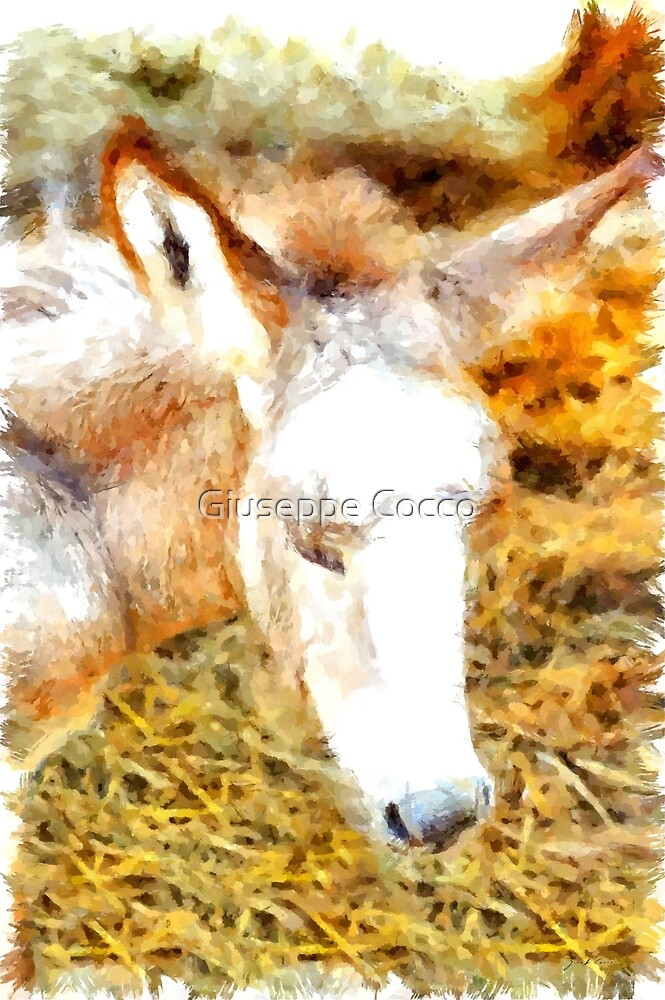 Muzzle of donkey puppy by Giuseppe Cocco