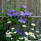 By The Fence by Linda Miller Gesualdo