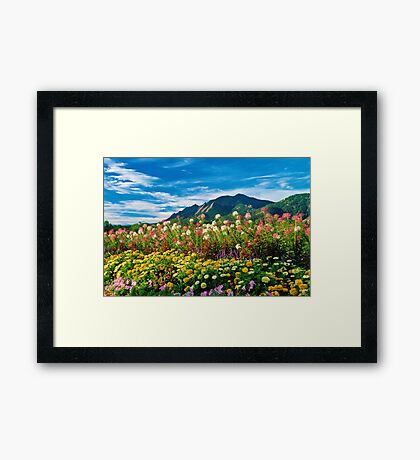 Flatirons And Flowers Framed Print