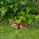 Baby Deer by Gypsykiss