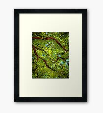summer leafy sun Framed Print