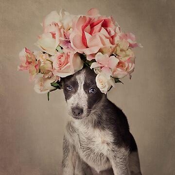 Shelter Pets Project - Opal by TammySwarek