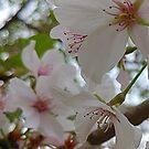 Precious Petals by Lisa Taylor