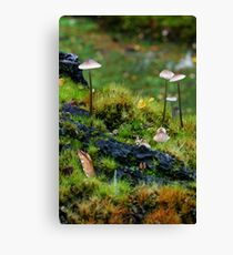 Shrooms in Miniature Canvas Print