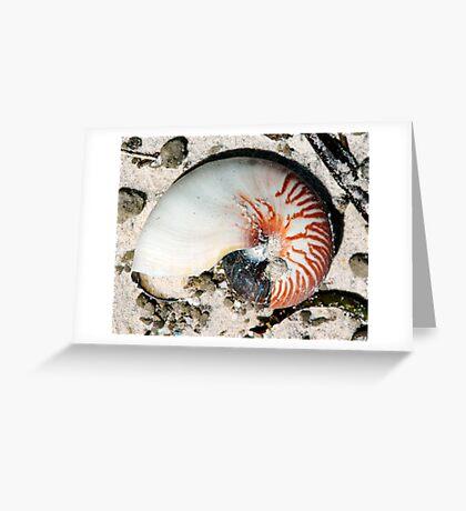nautilis Greeting Card