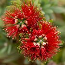 Bottle_Brush_2 by ChiaraLily