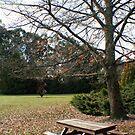Winter Picnic, Mount Lofty Botanic Gardens by Leigh Penfold