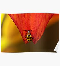 Spotted Cucumber Beetle Poster