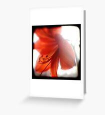 amaryllis ttv Greeting Card
