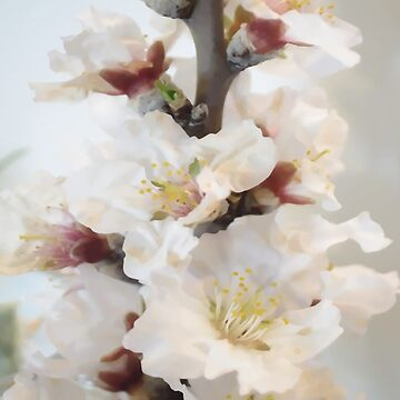 Spring blossoms vintage II by by-jwp