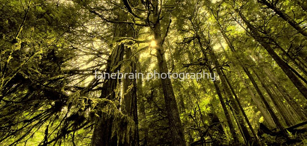 Hoh Rain Forest ~ Olympic Peninsula, WA ~ by lanebrain photography
