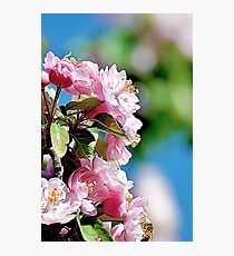 Spring into Bloom Photographic Print