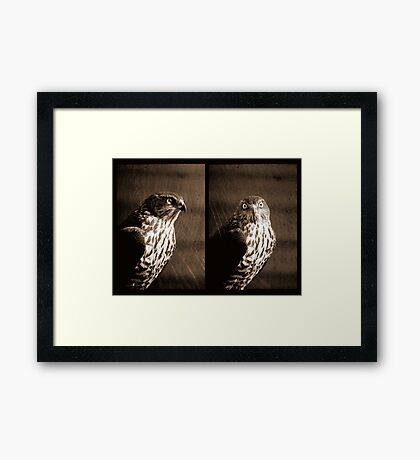Portrait of a Predator Framed Print